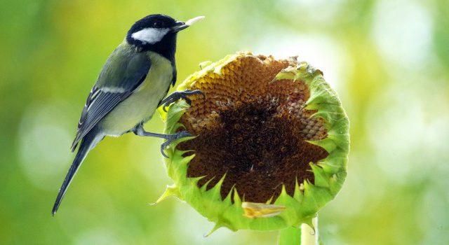 "Infoavond ""Natuurvriendelijke tuin"" op donderdag 6 februari"